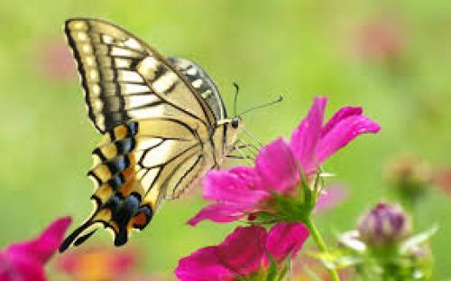 "Jangan Remehkan Keputusan Kecil-mu "" The Butterfly Effect teory"""